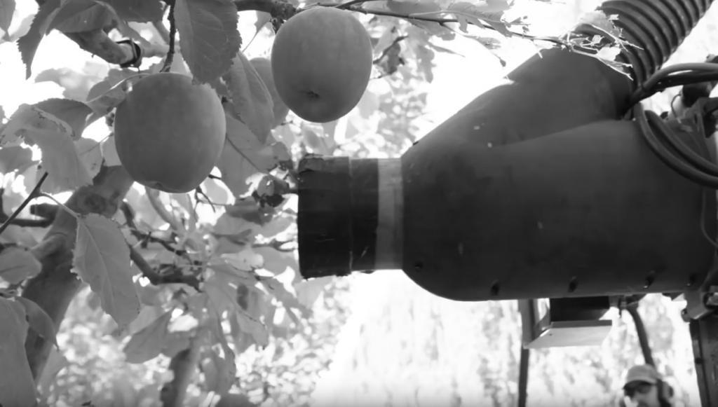 Der Apfelernter saugt die Früchte schonend an.